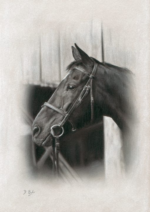 Darren Baker Horse Drawing
