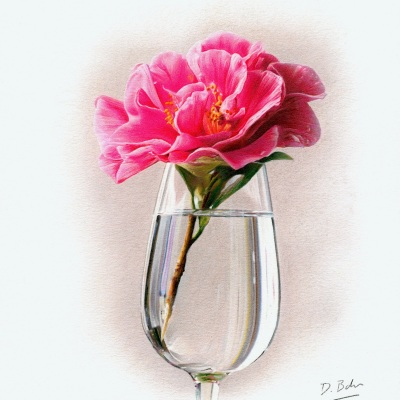 rose in glass study